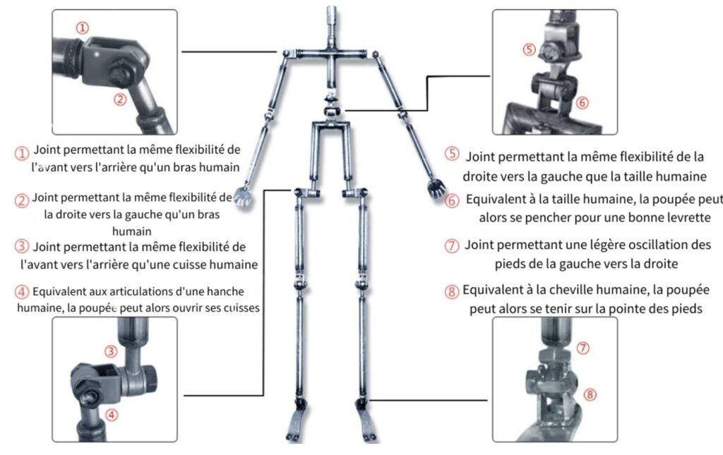 Squelette Métallique Articulé Sexdoll Tpe Et Silicone